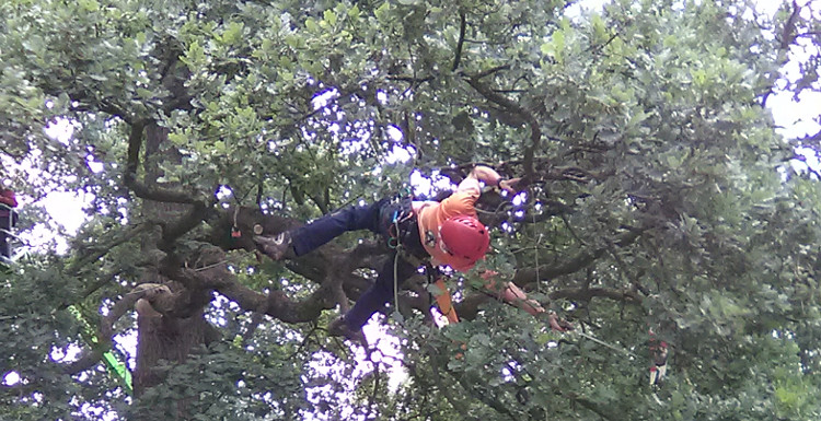 European Tree Climbing Competition and Trade Show
